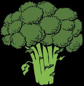 brokkoli-gezeichnet